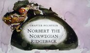 Norbert the Norwegian Ridgeback