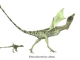 Dinodactylus altus