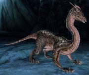 DragonlingDA.png