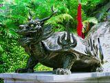 Drachenschildkröte (Begriffsklärung)