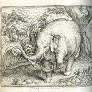 Plinius Elefant 3