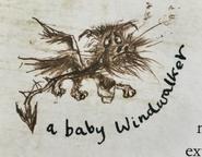 Windwalker Baby Buch