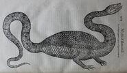Aldrovandi-Draco-bipes