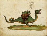 Draco aethiopicus.jpg