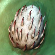 Großer Überwilder Ei