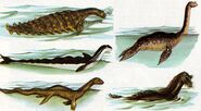Heuvelmans-sea-serpent