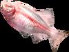 SoD Fisch Blindfisch