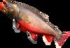 SoD Fisch Arktischer Saibling