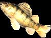SoD Fisch Barsch