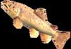 SoD Fisch Bachforelle