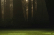 SereneForest