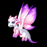 Magnolia Dragon