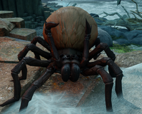Giant Spider Inquisition