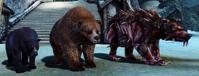 Bear Essentials