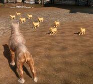 Коты Денерима