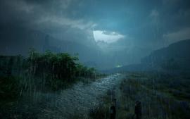 Der Kammwald