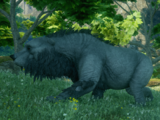 Großbär