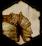 Inquisition-Medium-Armor-Schematic-icon1.png