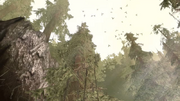 Area-BrecilianForestOrigin