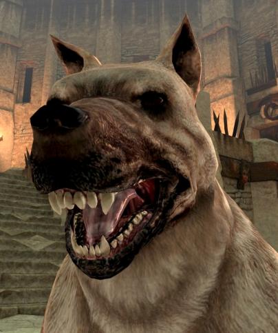 Perro de Hawke