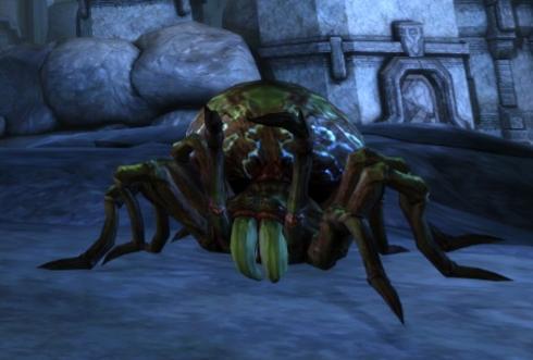 Giant poisonous spider