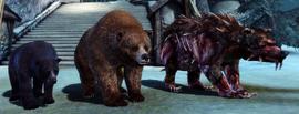 Медведи.png