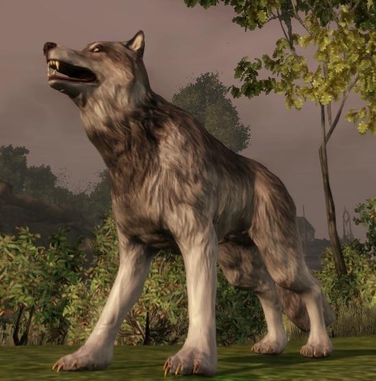 Кодекс: Волк