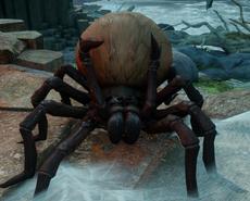 Гигантский паук Инквизиция