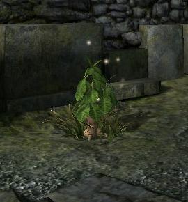Эльфийский корень (Dragon Age II).png