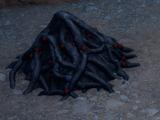 Todeswurzel (Inquisition)