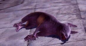 Creature-Spirit Hog