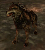 Blight wolf (thrall)