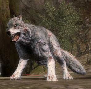 Codex entry: Wolf