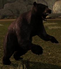 Black bear creature