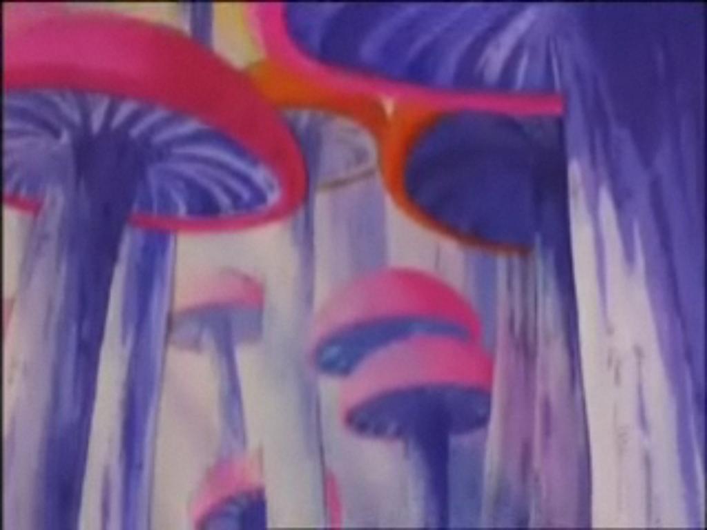 Foresta dei Funghi