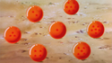Dragon Balls - Tree of Might - 001