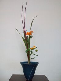 Audacciflowersanshu.jpg