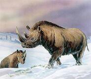 Tundra Rhino (Xz)