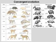 Convergent-Evolution-01.jpg