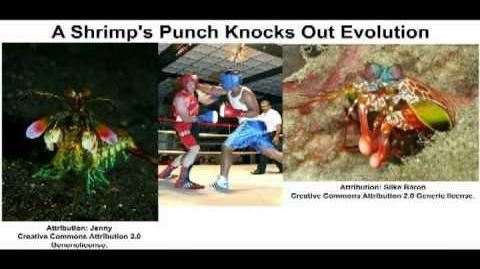 Shrimp Knocks Out Evolution