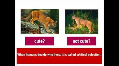 Evolution 1 Natural Selection vs