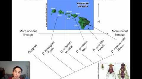 Allopatric_Speciation_and_Dispersal