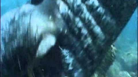 Elephant_Seal_Attacks_Divers
