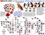 MickeyMicro-Evolution-1