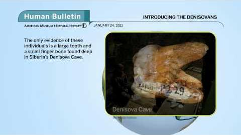 Science_Bulletins_Introducing_the_Denisovans