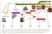 Human-familytree.jpg