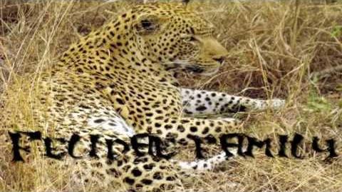 """Cat Evolution """"Felidae"""""""