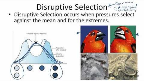 Type of Selection: Disruptive, Directional, Stabilizing, and Artificial.