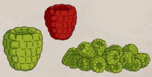 Bogeyberry