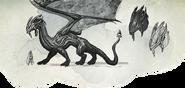 Sapphire Dragon sketch
